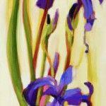 Les Iris d'Ulverton  A